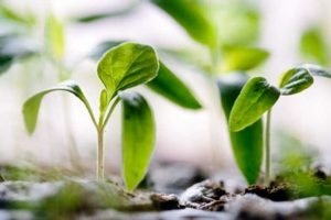 Life is like a seed that needs to be nurtured